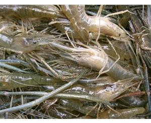 米乐网登录网址米乐app下载入口养殖
